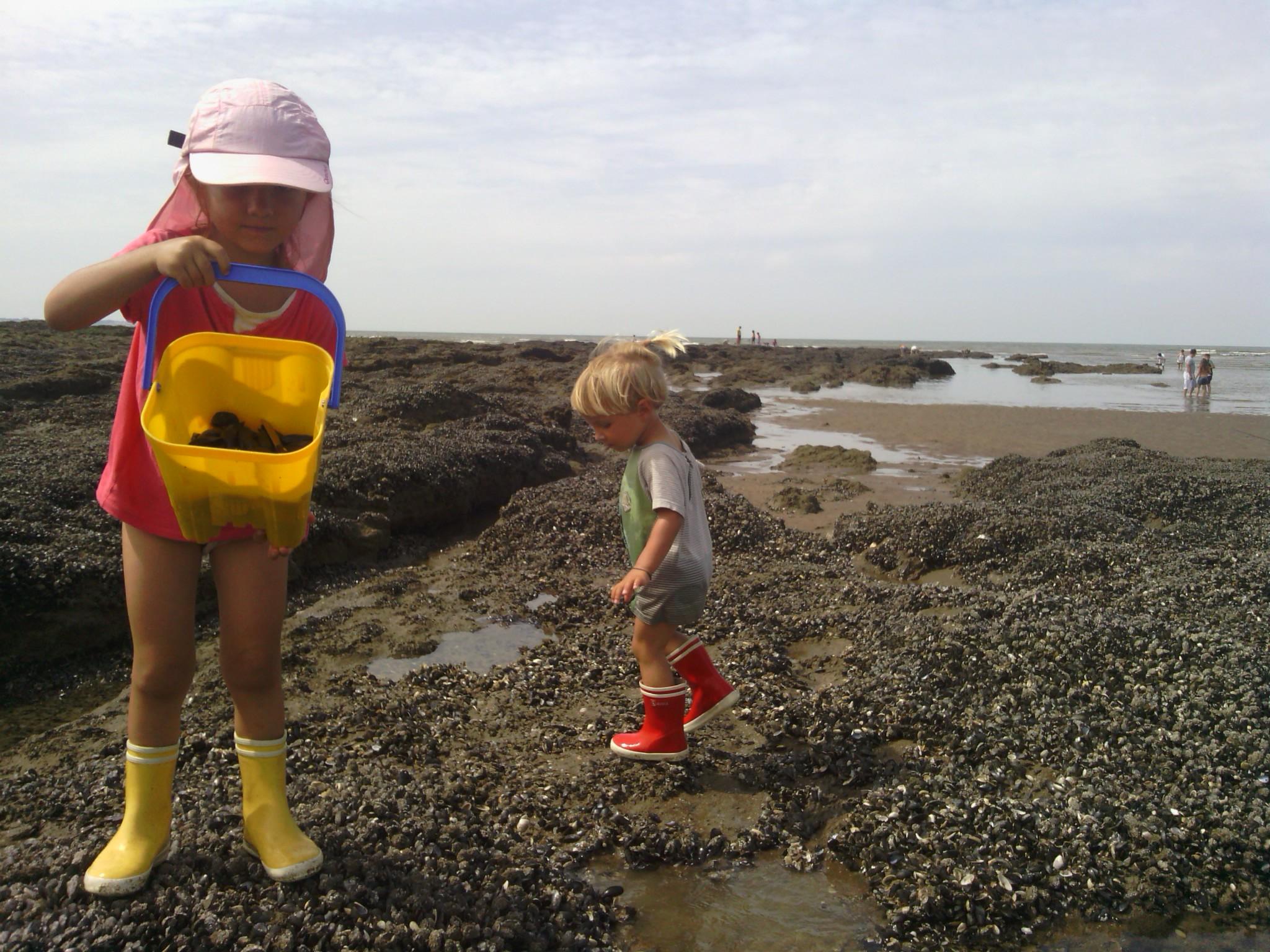 a la pêche aux moules moules moules - les petits sauts de puces